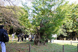 代々木公園での治療樹の経過観察
