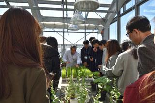 温室にて植物の病気を観察