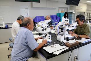 顕微鏡による標本の観察
